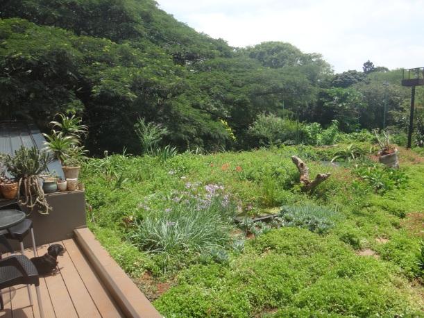 Roof Garden 'Now'